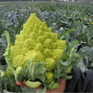 Speciality Cauliflower